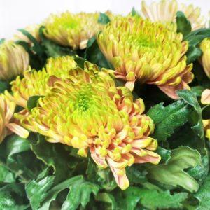 Букет 25 ароматных хризантем (ross elizabeth)