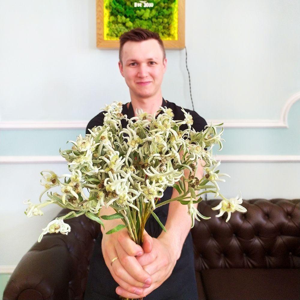Эдельвейс альпийский свежий «Everest Leontopodium» (поштучно)