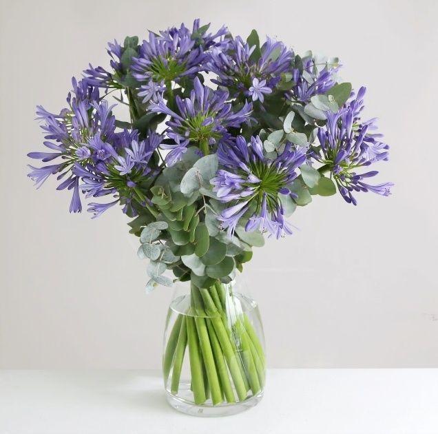 Букет 15 синих агапантусов с эвкалиптом (60см)