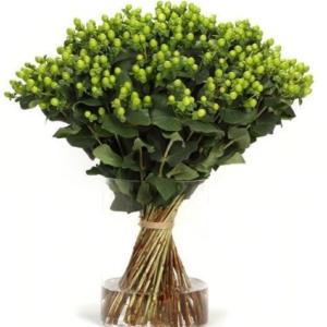 Букет 101 зелёный гиперикум