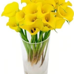Букет 15 желтых калл (50-60см)