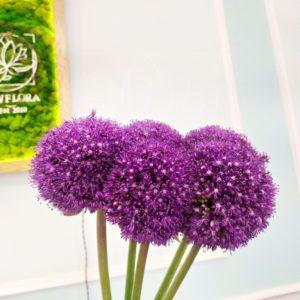 Букет 5 фиолетовых аллиумов 90см «ambassador super»