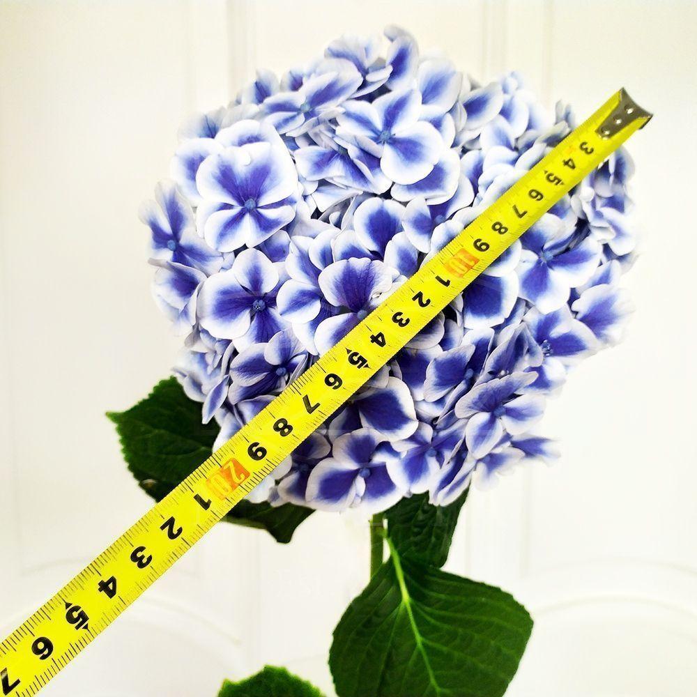 Букет 9 бело-голубых гортензий «beau dali»