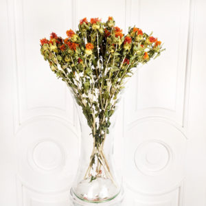 Шафран дикий «картамус» (сухоцвет)