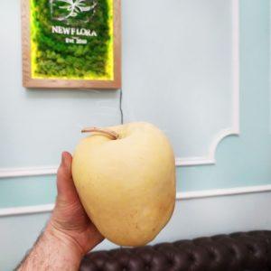 Тыква тропическая «jungle apple» (сухоцвет)