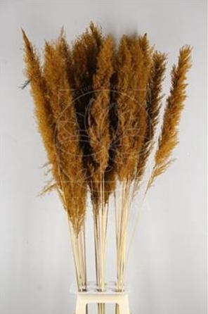Кортадерия коричневая 140см (поштучно)