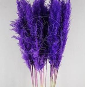 Кортадерия фиолетовая 140см (поштучно)