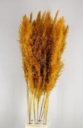 Кортадерия рыжая 140см (поштучно)