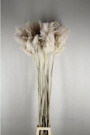 Кортадерия натуральная 180-190см (поштучно)