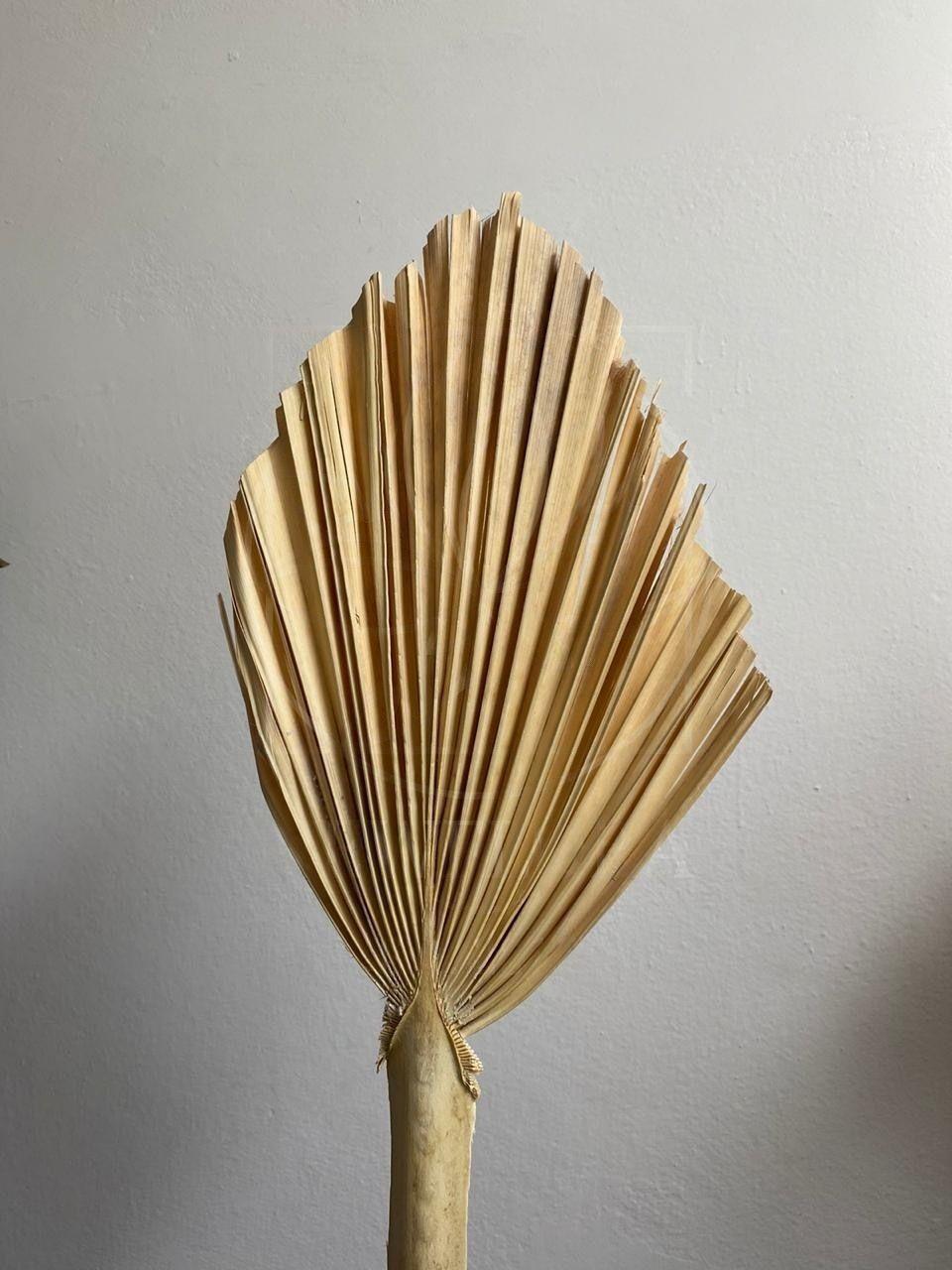 Ветка пальмы «бисмаркия» 70×30см (сухоцвет)