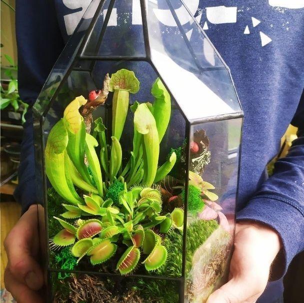 Цветы хищники во флорариуме #1