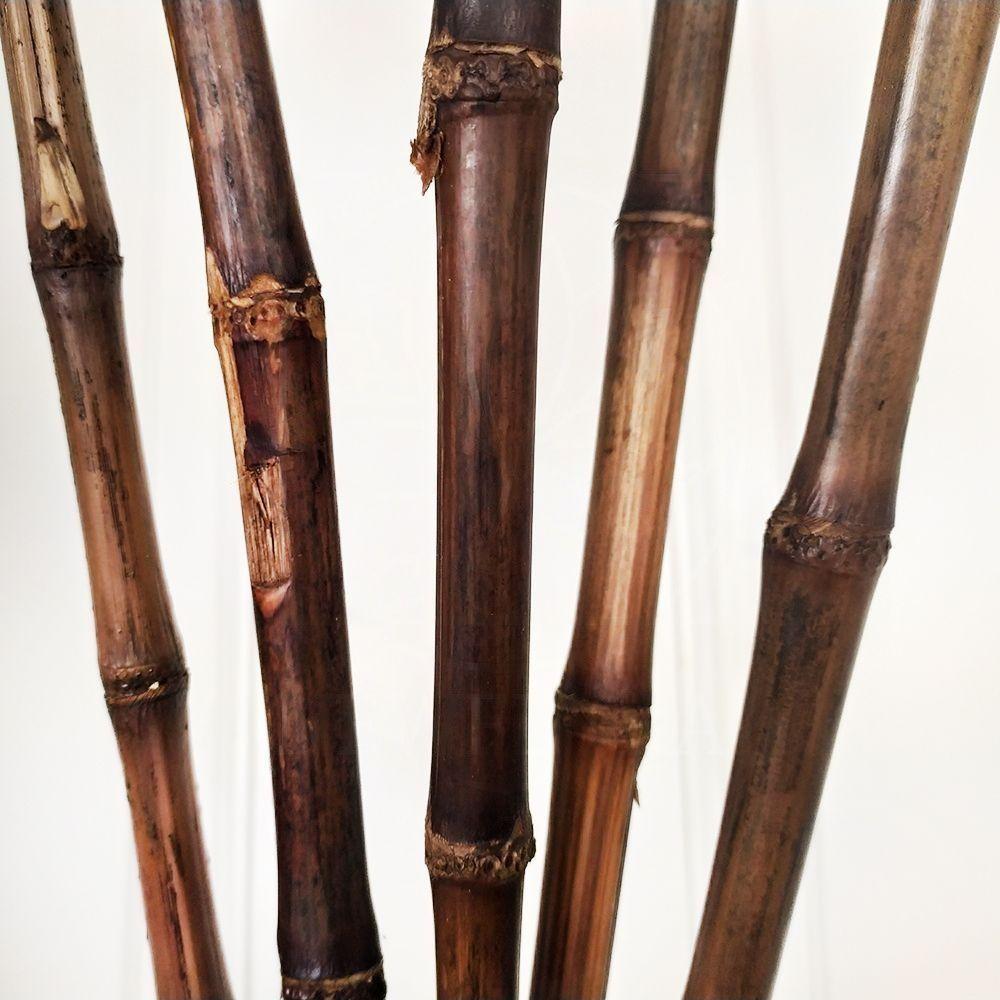 Большой набор стебелей сахарного тростника