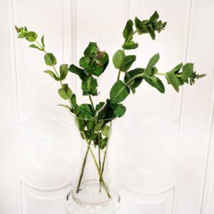 Мята «jocka leaves» (поштучно)