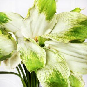 Каллы зеленые «green goddess» 70-80см (поштучно)