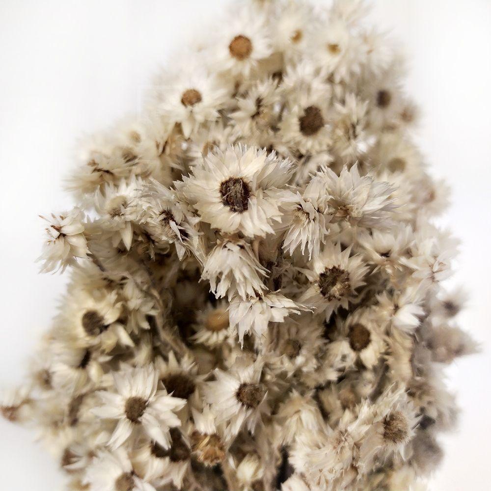Эдельвейс маленький поштучно (сухоцвет)