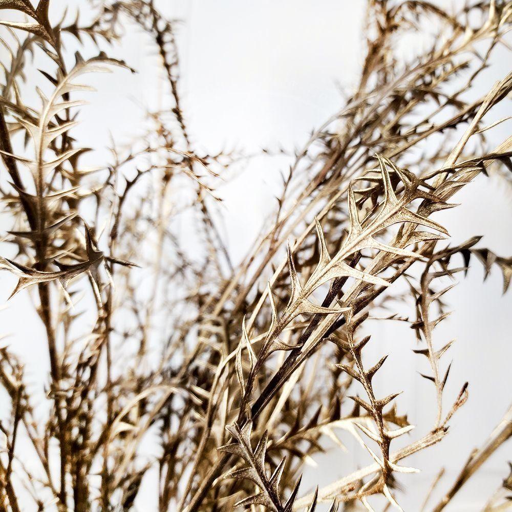 Гревиллея золотая «grevillea ivanhoe» (сухоцвет)