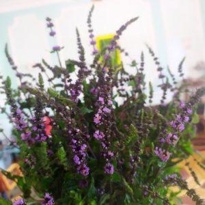 Букет 19 веток мяты «purple sensation»