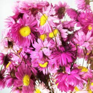Акролиниум розовый 50см (сухоцвет)