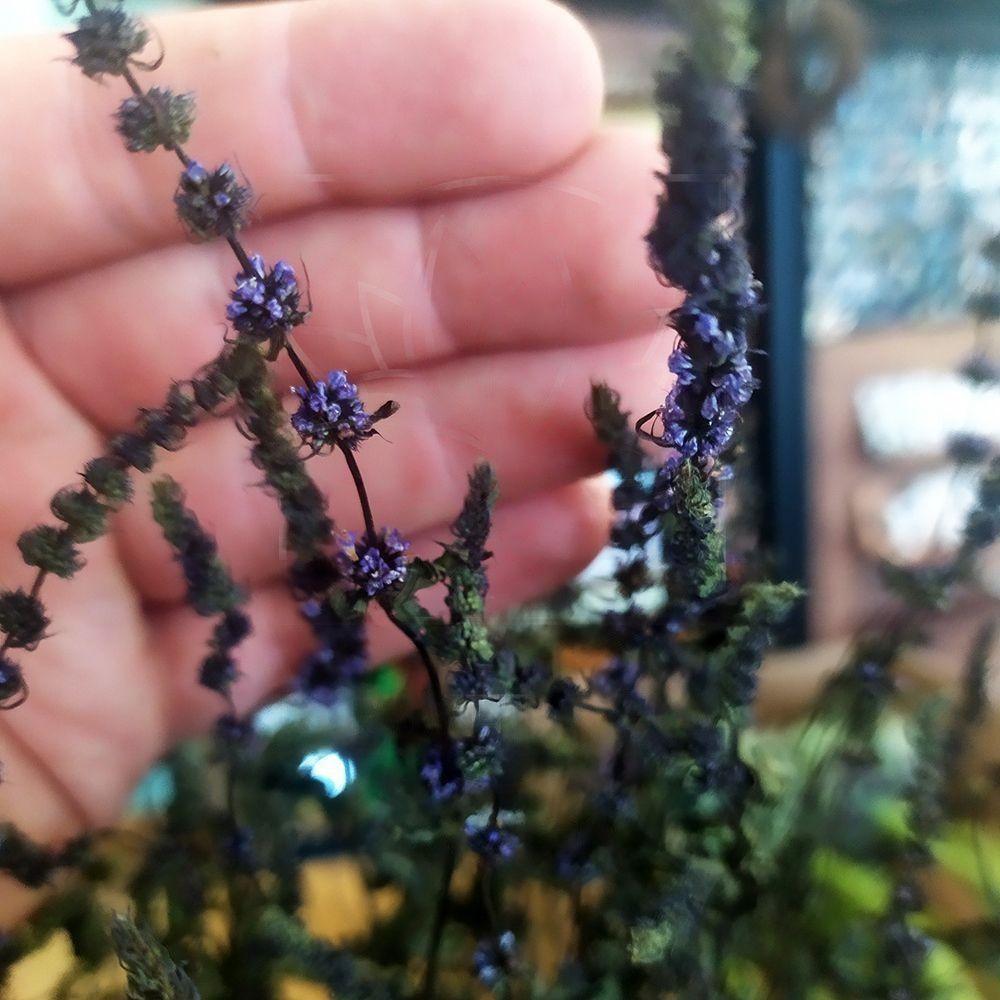 Мята «purple sensation» сухоцвет (поштучно)