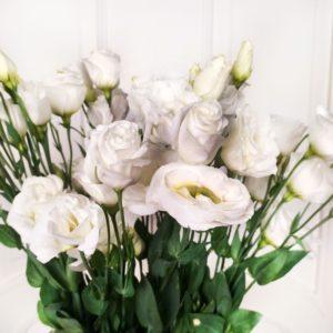 Лизиантус белый 100см (поштучно)