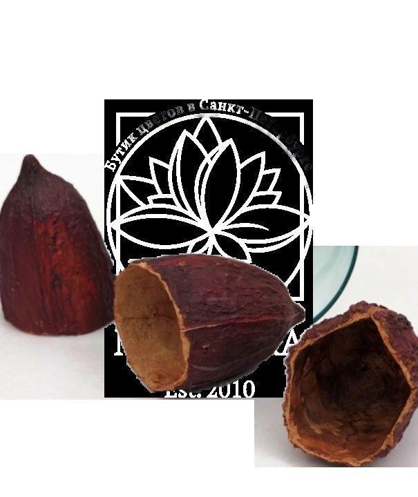 Набор 60 кружек из какао-бобов (тропический сухоцвет)