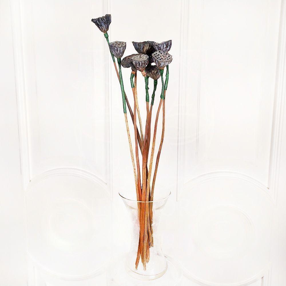 Лотос нелюмбо с семенами (сухоцвет)