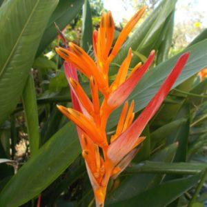 Набор тропических цветов #2