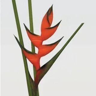 Набор тропических цветов #1