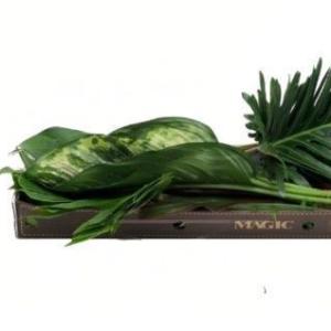 Набор тропических цветов (зелень) #4