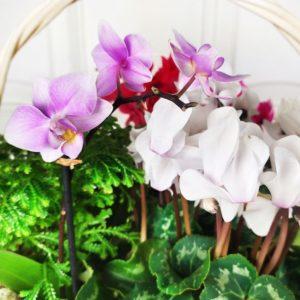 Корзина цветов с корневой системой #2 (срок жизни до 30 дней и более)