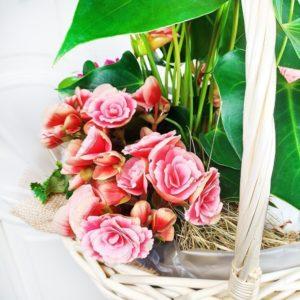 Корзина цветов с корневой системой #3 (срок жизни до 30 дней и более)