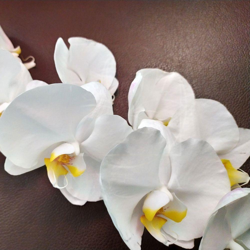 Орхидея фаленопсис белая (на ветке)