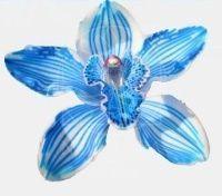 Голубая орхидея цимбидиум на ветке (80см)