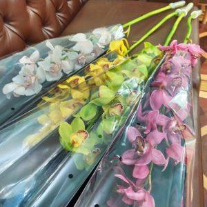 Орхидея цимбидиум высота 100см (поштучно)