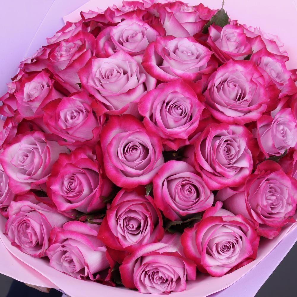 Пурпурные розы Deep Purple поштучно (Юж. Америка)
