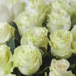 Крупные белые розы Mondial 60-70см (Юж. Америка)