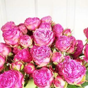 Кустовые пионовидные розовые розы с крупным бутоном (поштучно)
