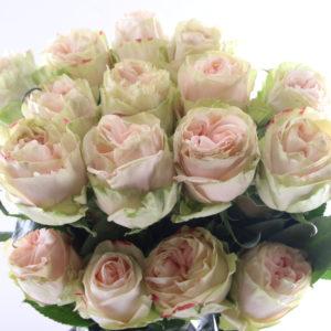 Розы пионовидные Wedding Spirit (поштучно)