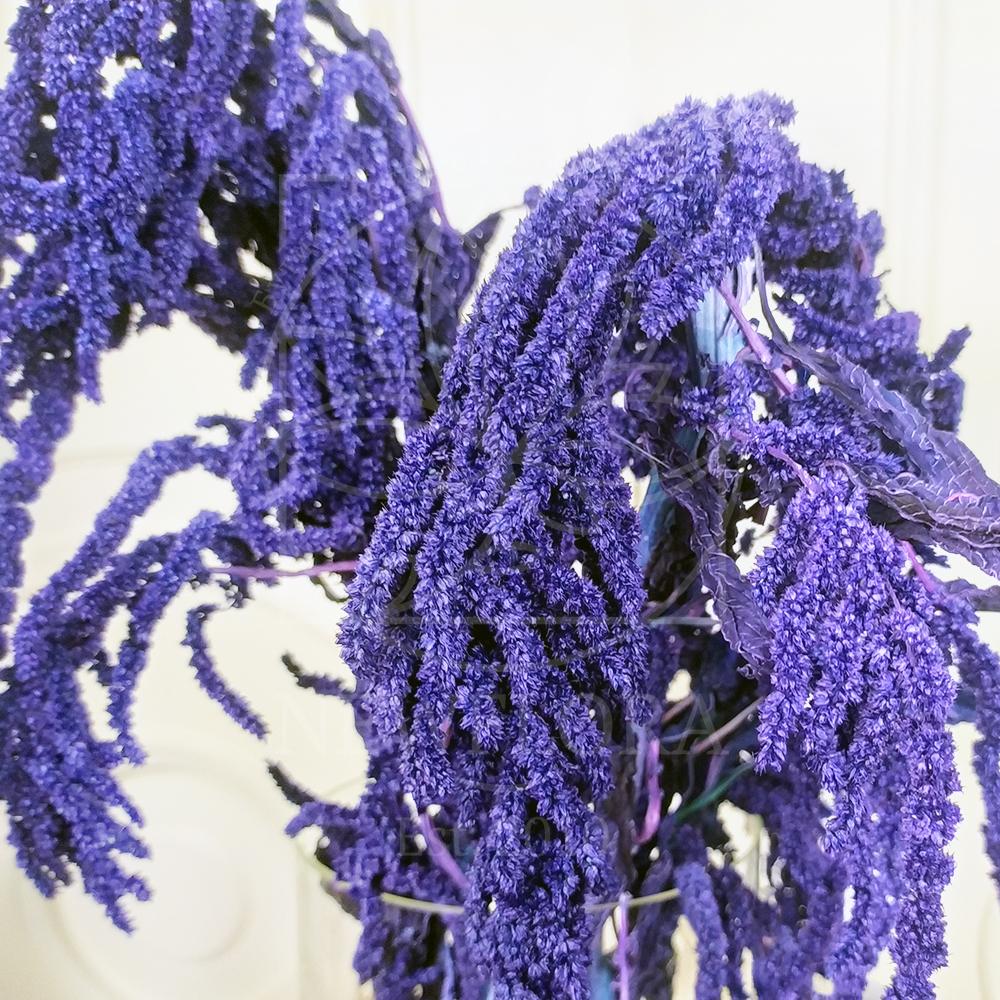Амарант фиолетовый стабилизированный (поштучно)