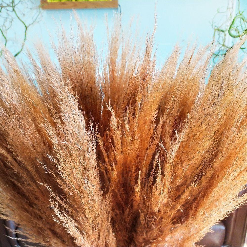 Кортадерия персиковая 100см (поштучно)