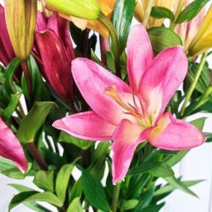 Лилии цвет микс 70-80см (поштучно)