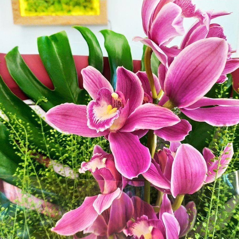 Букет розовая орхидея с монстерой XXL